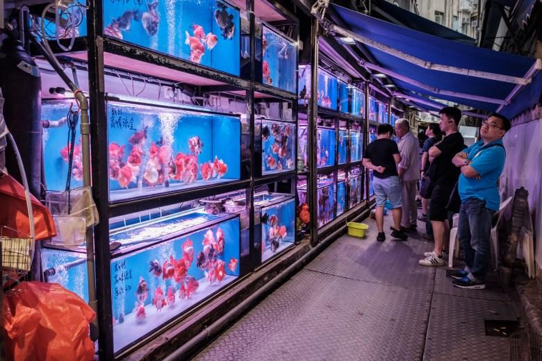 Hong Kong Kowloon 117