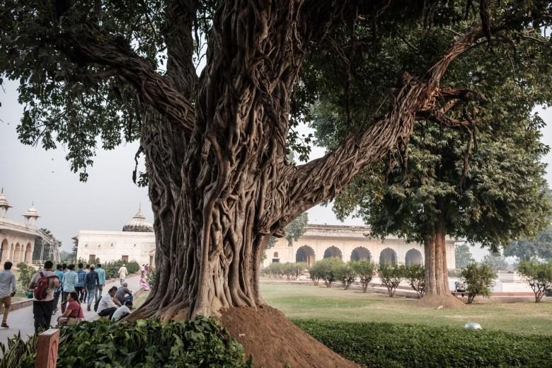 India Delhi 56