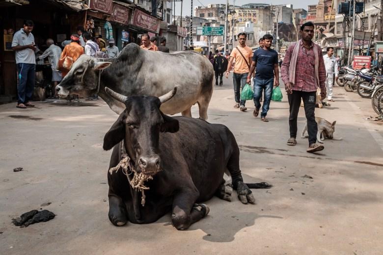 India Varanasi 060