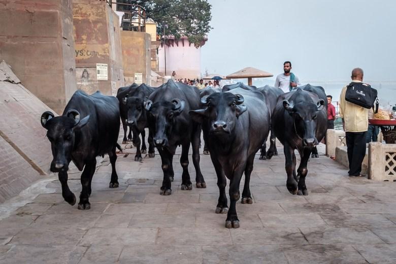 India Varanasi 072