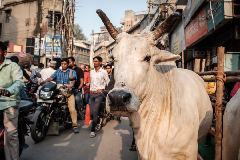 India Varanasi 110