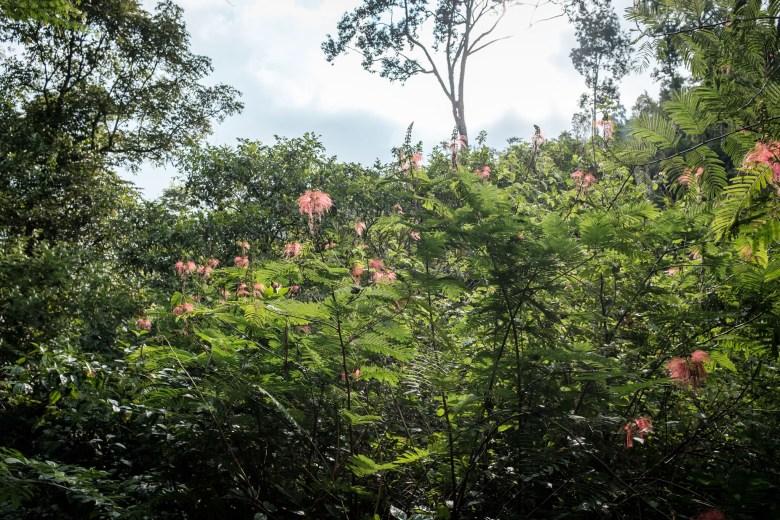 Indonesia Munduk 059