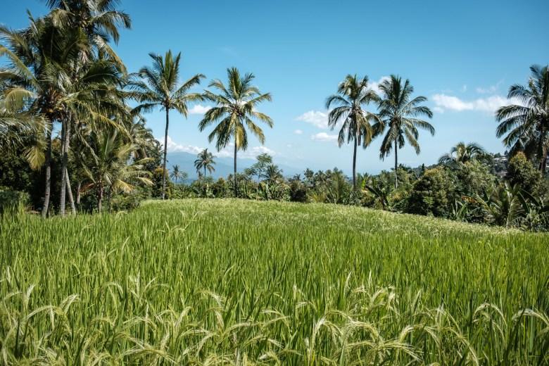 Indonesia Munduk 073