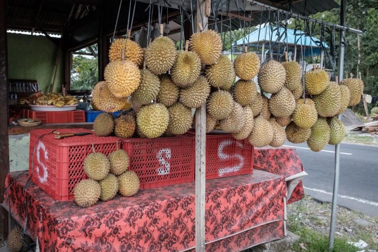Indonesia Munduk 114