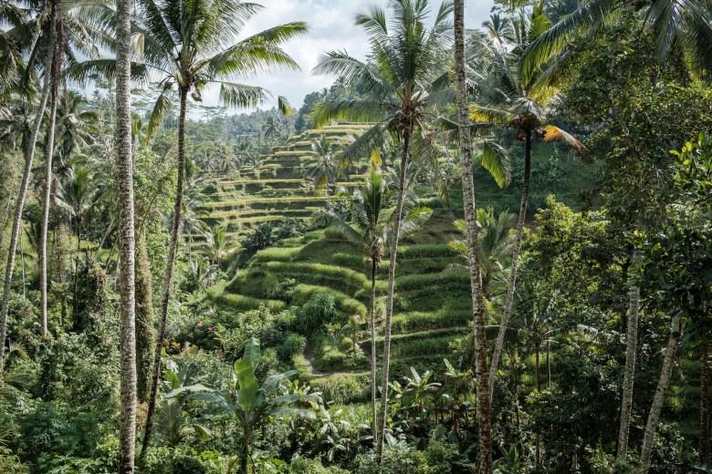 Indonesia Tirta Empul 09