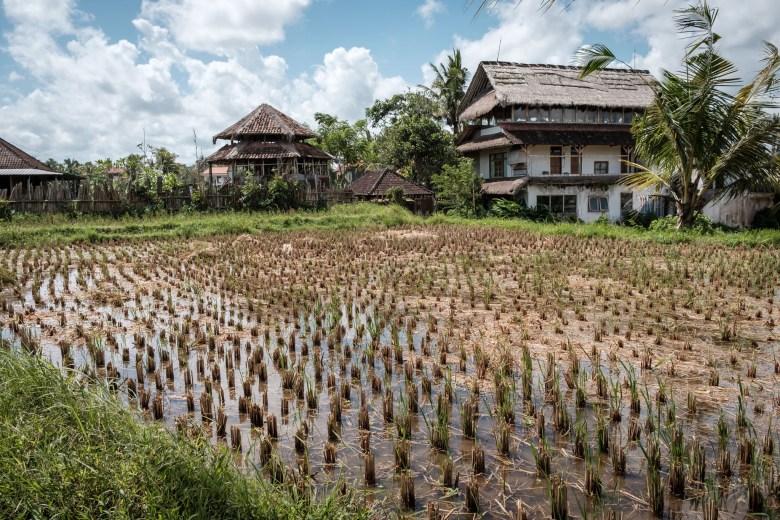 Indonesia Ubud 040