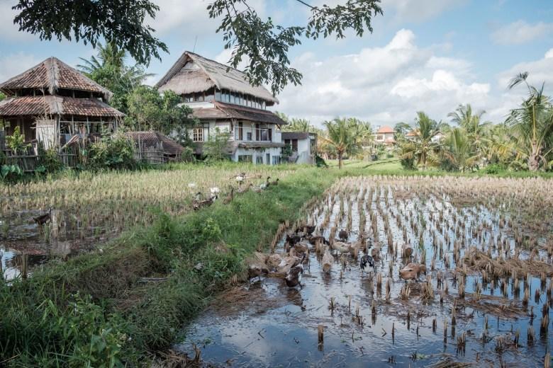 Indonesia Ubud 045