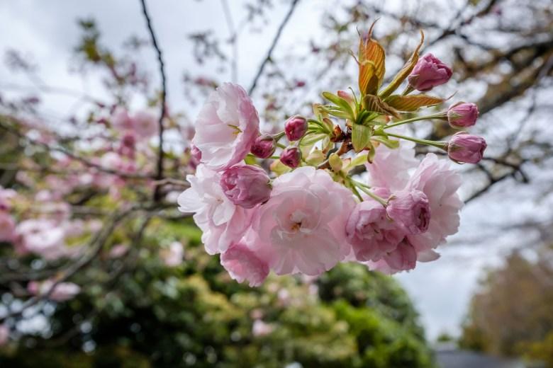 Japan Kyoto 087