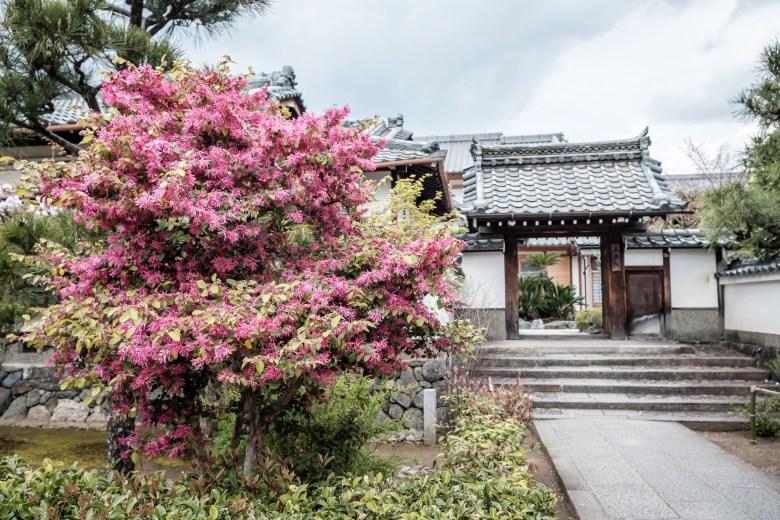 Japan Kyoto 098