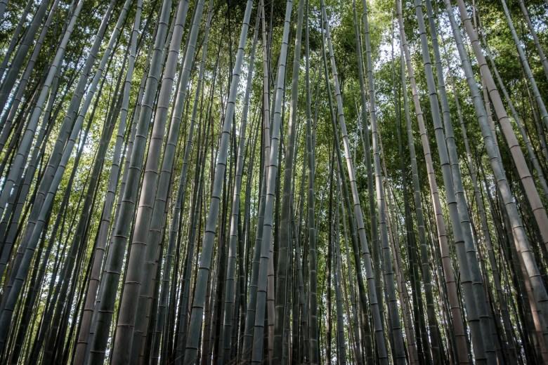 Japan Kyoto 103