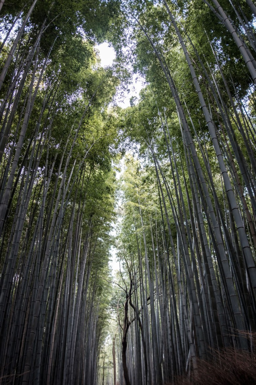 Japan Kyoto 110