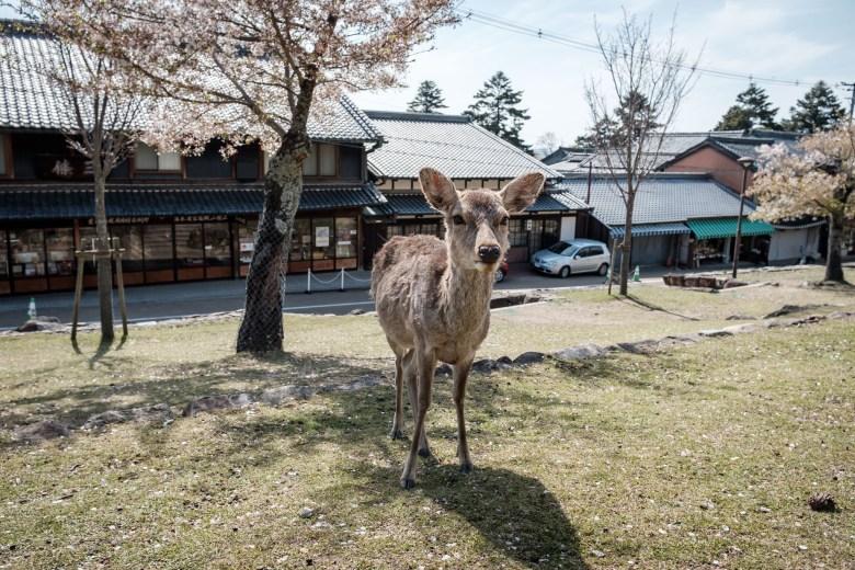 Japan Nara 27