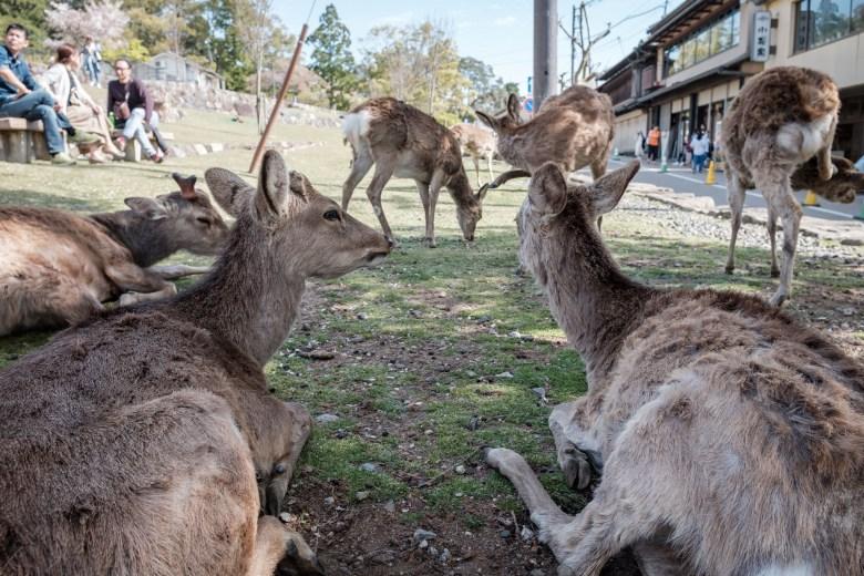 Japan Nara 28