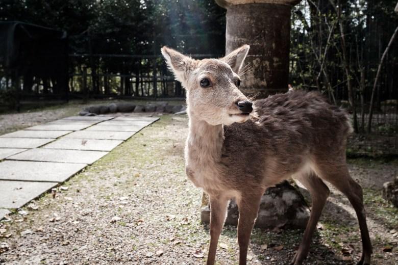 Japan Nara 34