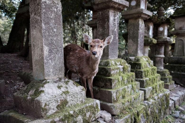 Japan Nara 42
