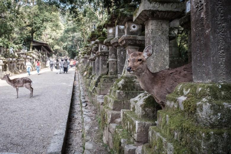 Japan Nara 43