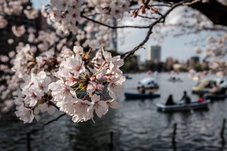 Japan Tokyo 033