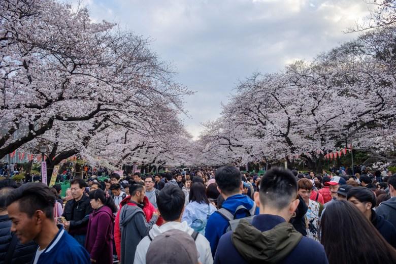 Japan Tokyo 048