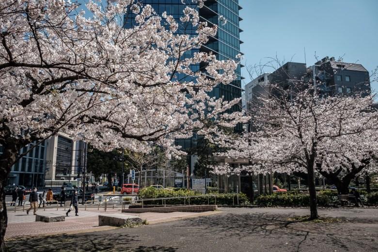 Japan Tokyo 165