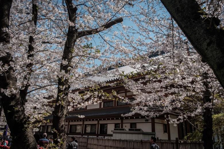 Japan Tokyo 182