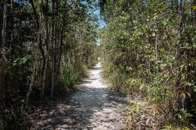 Malaysia Bako National Park 025