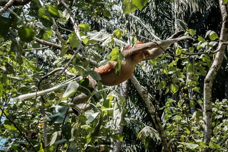 Malaysia Bako National Park 048