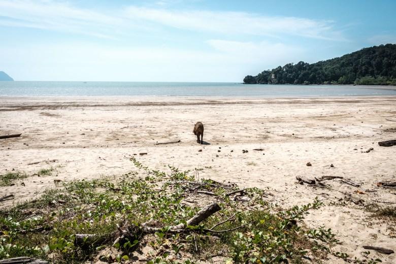 Malaysia Bako National Park 049