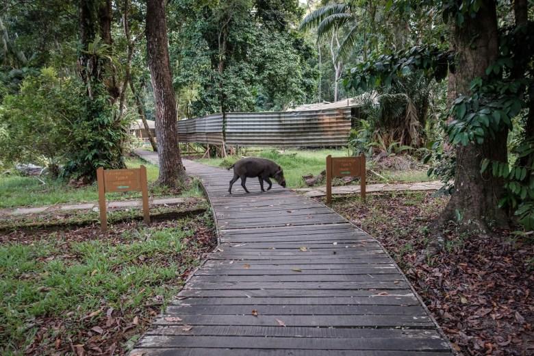 Malaysia Bako National Park 064
