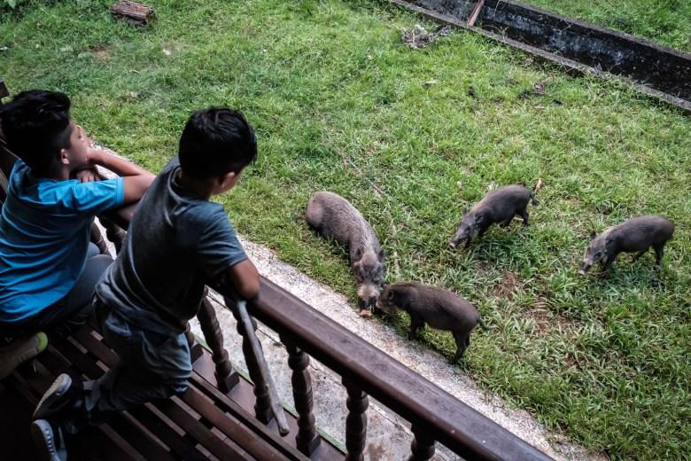 Malaysia Bako National Park 066
