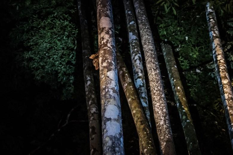 Malaysia Bako National Park 071