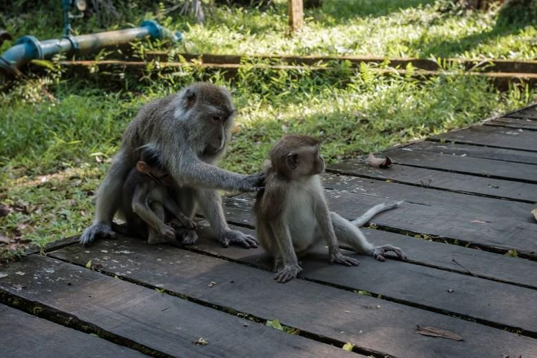 Malaysia Bako National Park 087