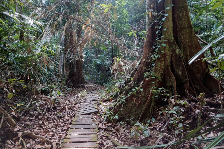 Malaysia Bako National Park 101