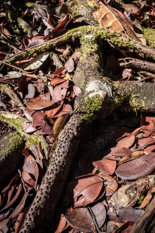 Malaysia Bako National Park 104