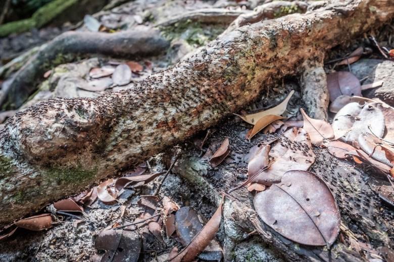 Malaysia Bako National Park 107