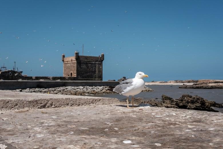 Morocco Essaouira 01