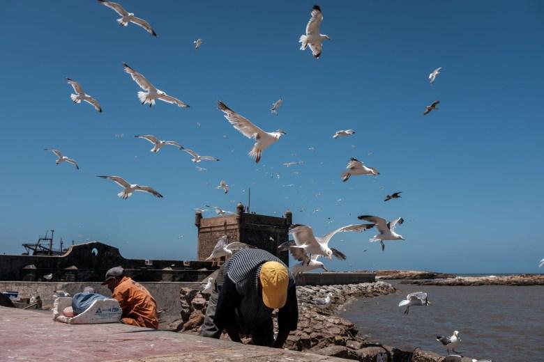 Morocco Essaouira 41