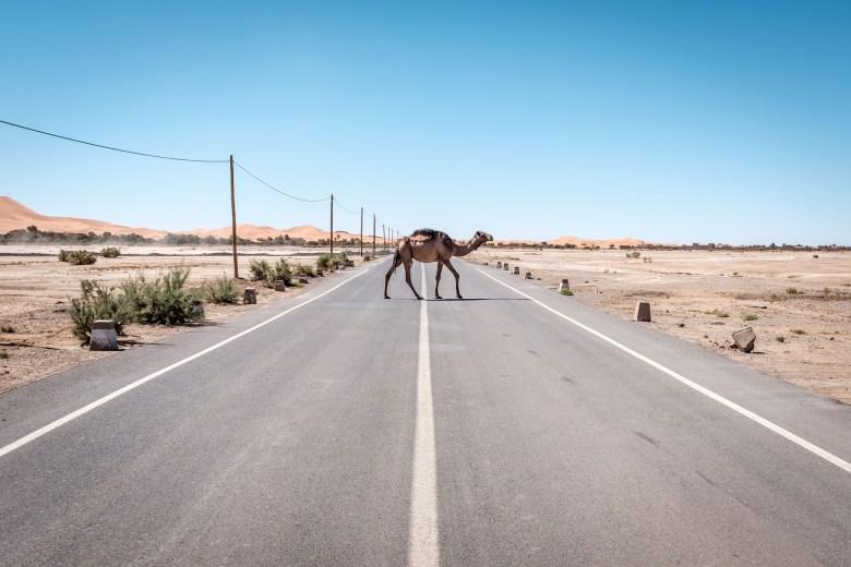 Morocco Merzouga 036