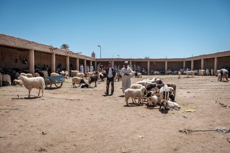 Morocco Rissani 01