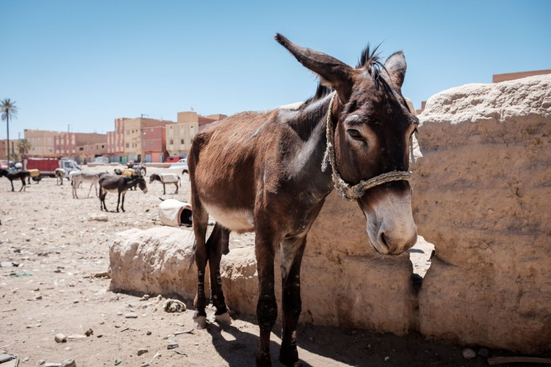 Morocco Rissani 08