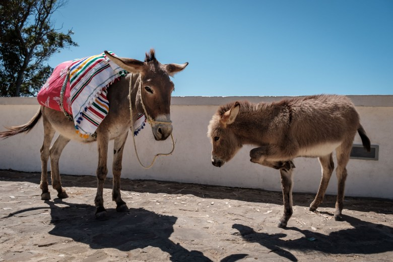 Morocco Tangier 50