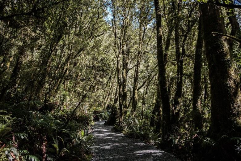 New Zealand Milford Sound 16