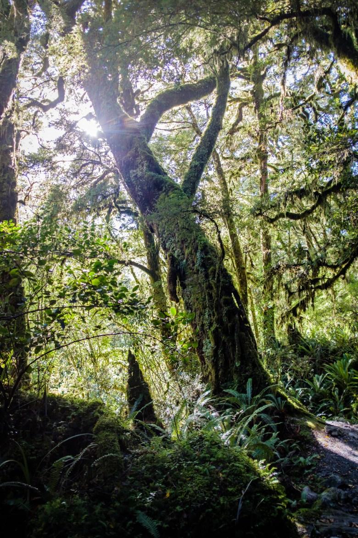 New Zealand Queenstown 045