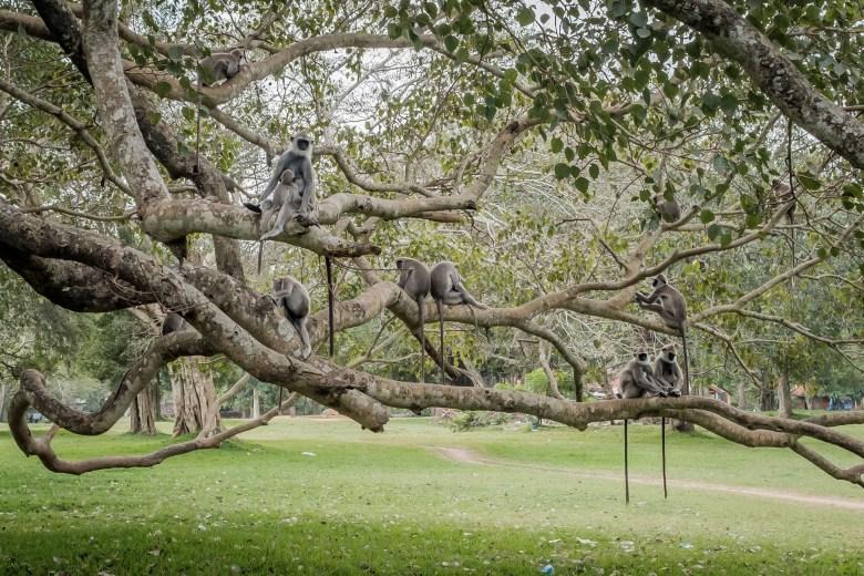 Sri Lanka Anuradhapura 01