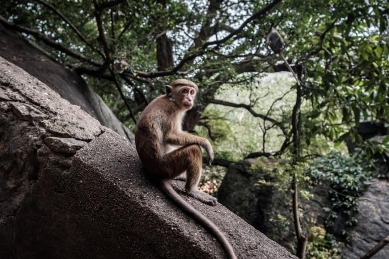 Sri Lanka Dambulla 15