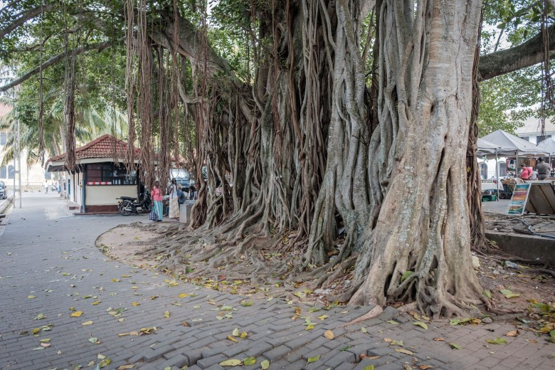 Sri Lanka Galle 17