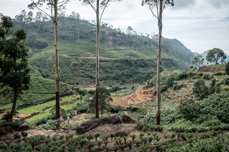 Sri Lanka Nuwara Eliya 52
