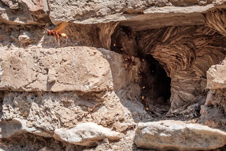 Turkey Ephesus 19