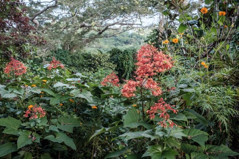 Vanuatu Efate 026