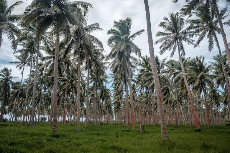 Vanuatu Efate 110
