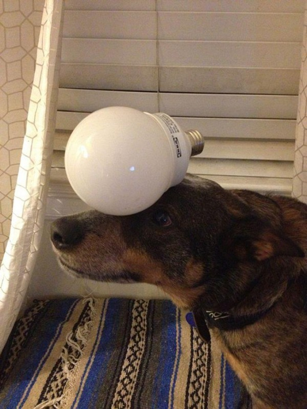 Energy Saver on the Head of Jack Dog